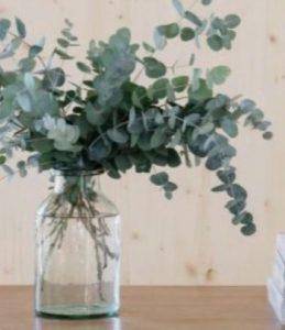 Eucalyptus bunch2